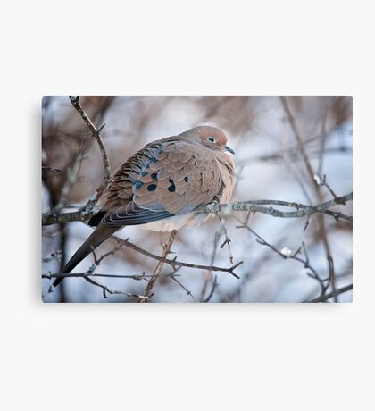 Mouring Dove In Shrubs Metal Print