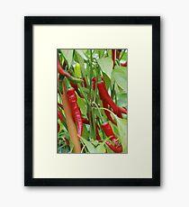 Red hot chilli Framed Print