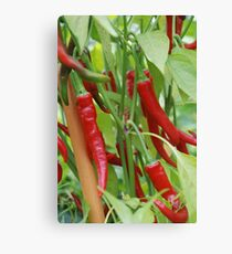Red hot chilli Canvas Print