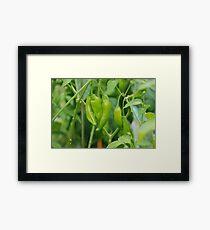Lemon Drop Chilli Framed Print
