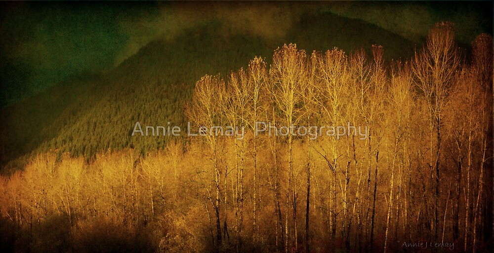 November  by Annie Lemay  Photography