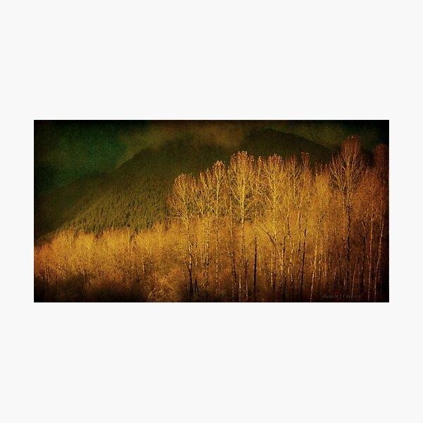 November  Photographic Print
