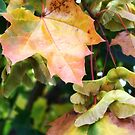 Autumn Farewell by rocamiadesign