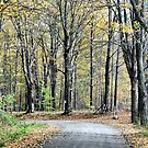 The Leaves Are Falling by Deborah  Benoit