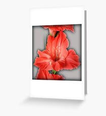 gladiola in pastel tones Greeting Card