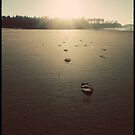 Footsteps to the Sun by Avena Singh