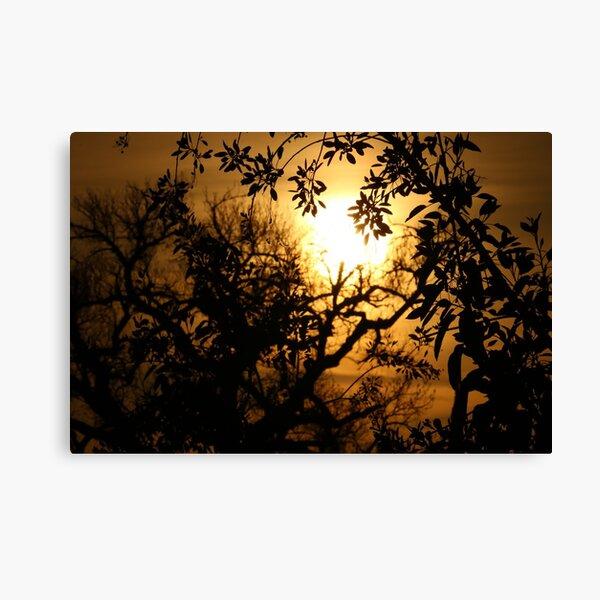Sun Setting with Tree Shadows Canvas Print