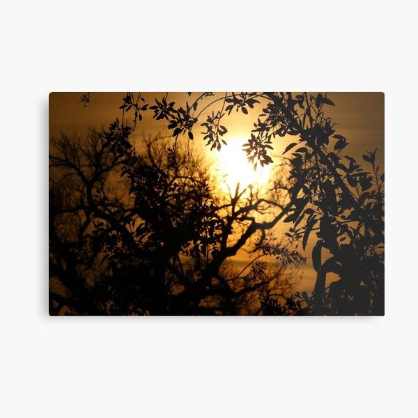 Sun Setting with Tree Shadows Metal Print