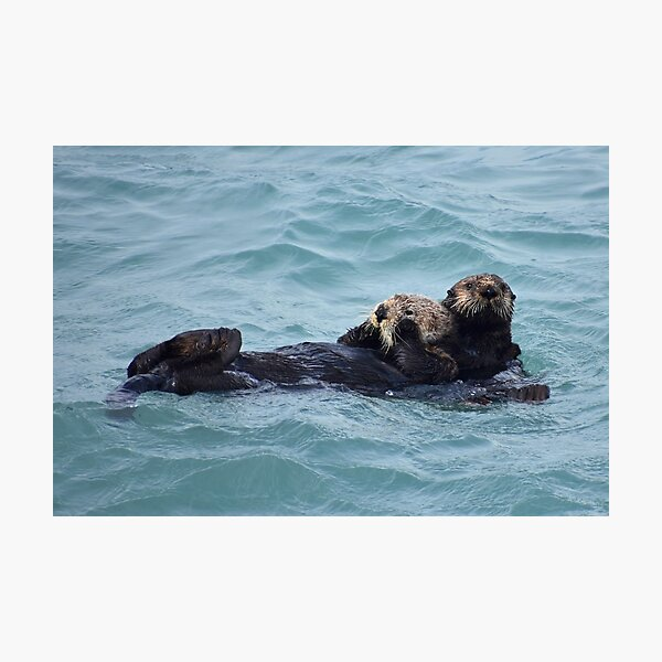 Hugging Otters Photographic Print