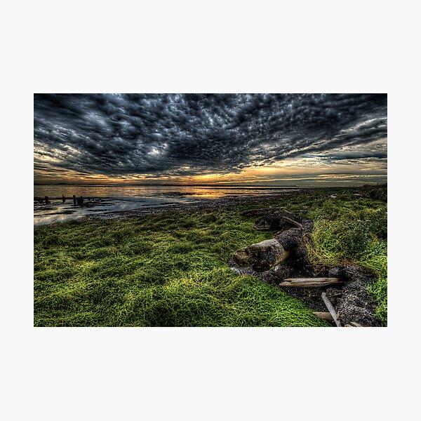 Foreshore at Boundary Bay Photographic Print