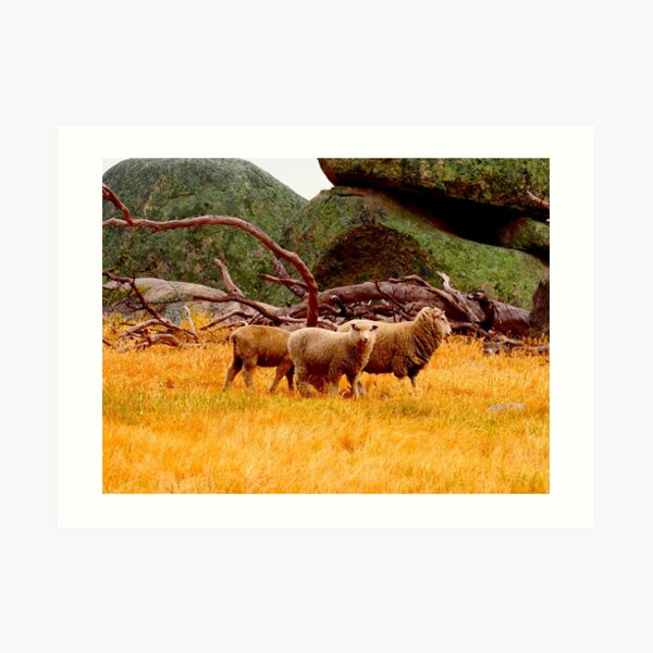 On The Lancefield Tooborac Road Country Victoria Art Print