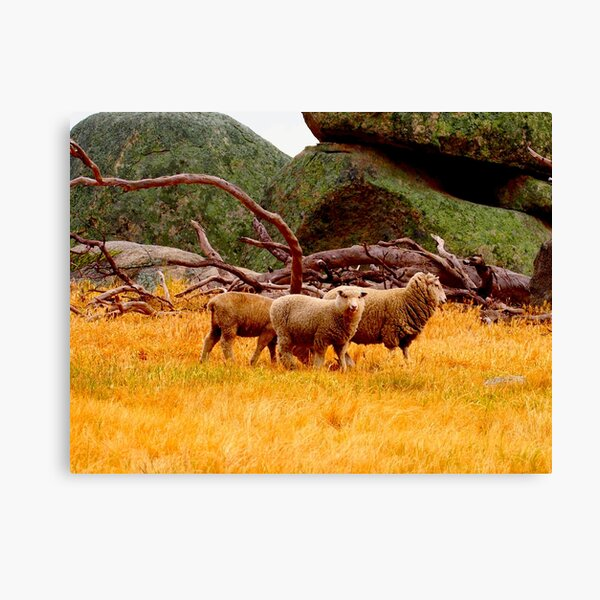 On The Lancefield Tooborac Road Country Victoria Canvas Print
