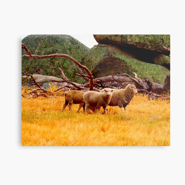 On The Lancefield Tooborac Road Country Victoria Metal Print