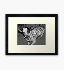 Kia  Framed Print