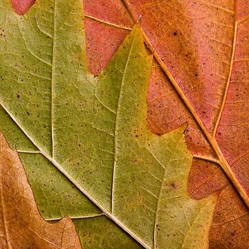 Natural autumn leafs by sustine