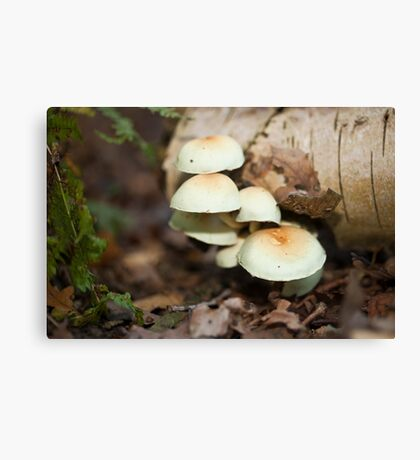 Tree Fungi Canvas Print