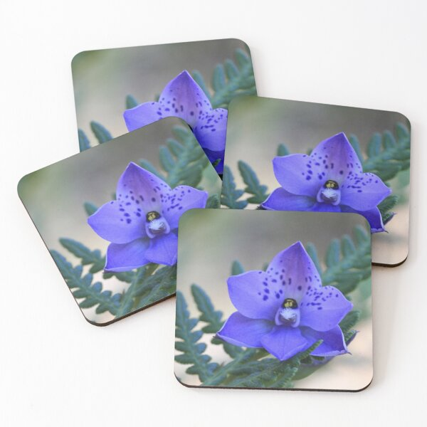Sun Orchid Coasters (Set of 4)
