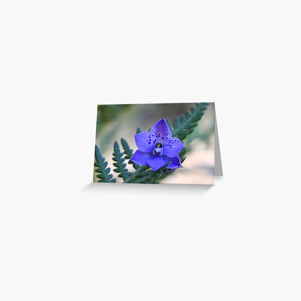 Sun Orchid Greeting Card