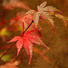 Leaf Zen R by Rebecca Cozart