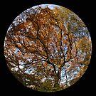 Autumn Colour by rosiephoto