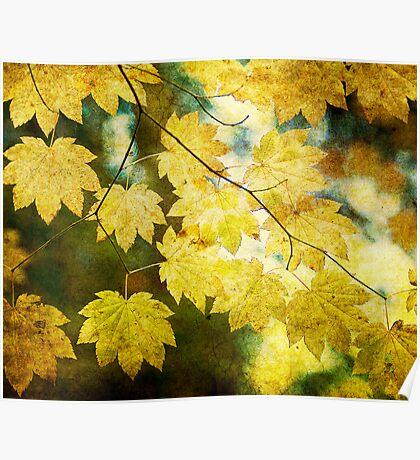 Leaf Zen T Poster
