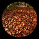 Forest Floor by rosiephoto