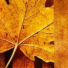 Leaf Zen X by Rebecca Cozart