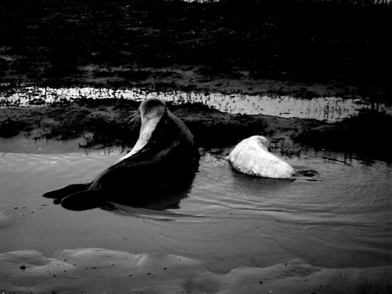 Mother and Baby Seals by Zozzy-zebra