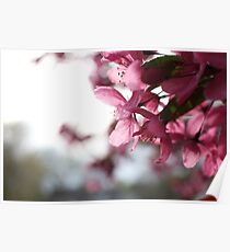 Perennial Blossom  Poster