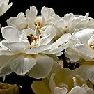Flowers by Chrissy Edye