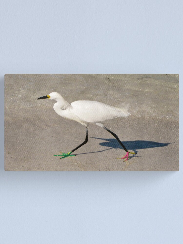 Alternate view of Snowy Egret - Red Green Morph Canvas Print