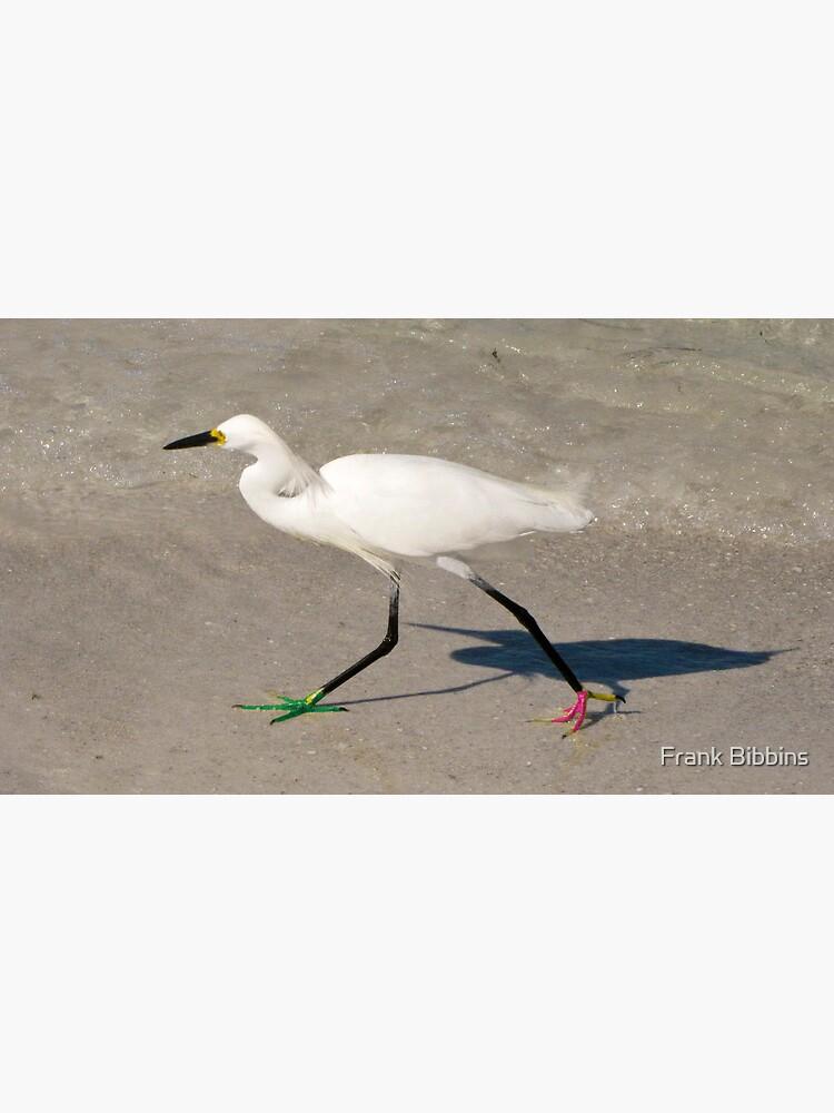 Snowy Egret - Red Green Morph by organicman2
