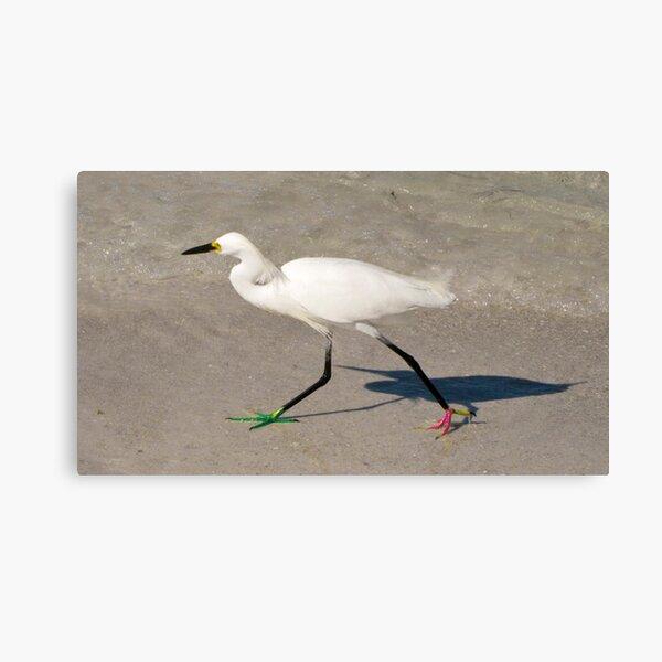 Snowy Egret - Red Green Morph Canvas Print