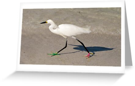 Snowy Egret - Red Green Morph by Frank Bibbins