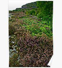 Lavender landscape . Brown Sugar tribute to Marillion. Views (398) thx! Poster