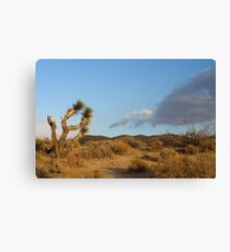 In the Red Cliffs Preserve, Cantil, California Canvas Print