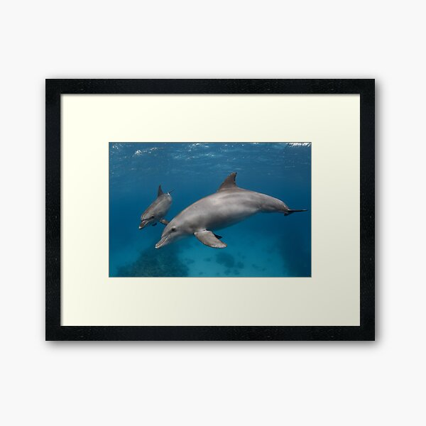 Wildlife geometry Framed Art Print