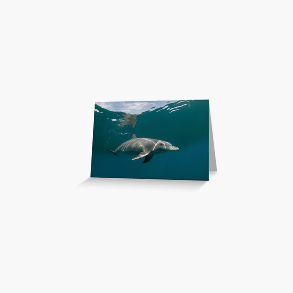 Eye to eye with dolphin Greeting Card