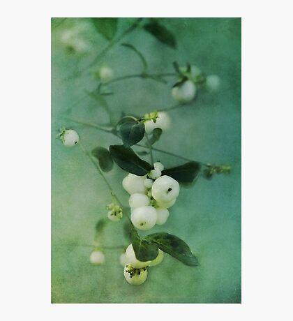 Snowberries Photographic Print