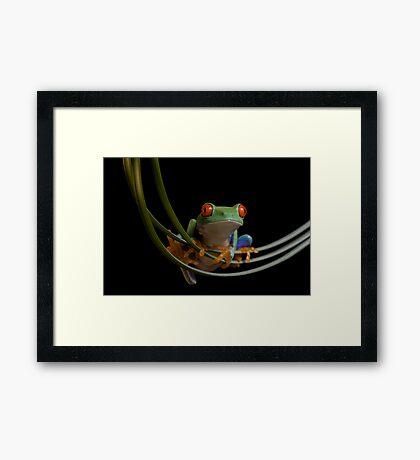 The frogs hammock Framed Print