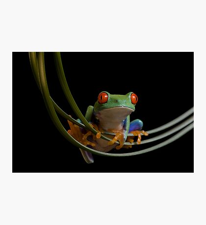 The frogs hammock Photographic Print