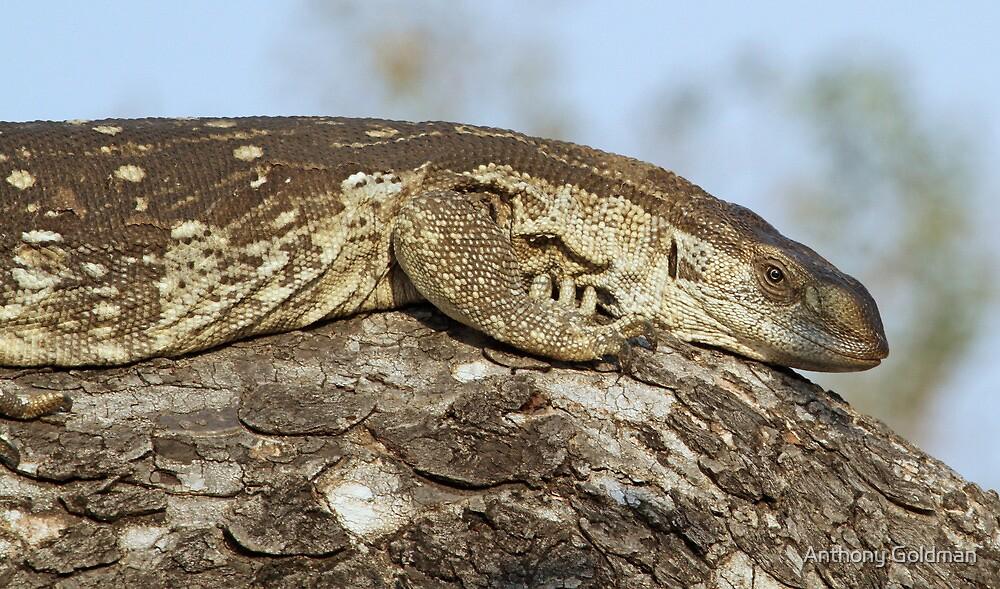 Monitor lizard on tree by jozi1