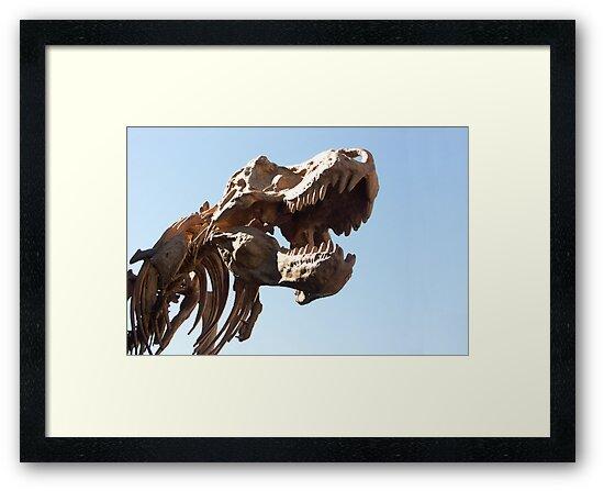 Rex by Bob Hardy