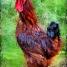 The Displaced Rooster by Debra Fedchin
