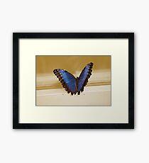 Morpho Micropthalmus (Blue Morpho) Butterfly Framed Print
