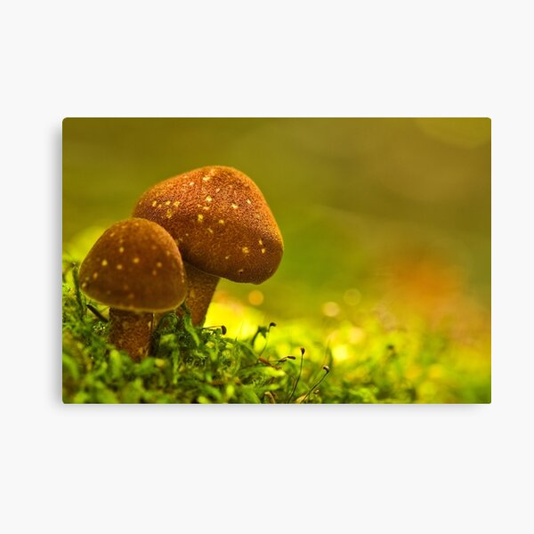 double brownies Canvas Print