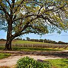 Vineyard by peterperfect