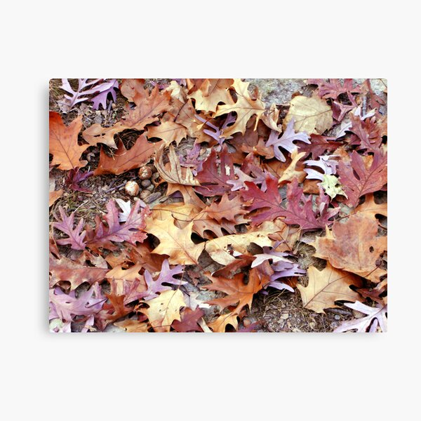 Glory Underfoot Canvas Print