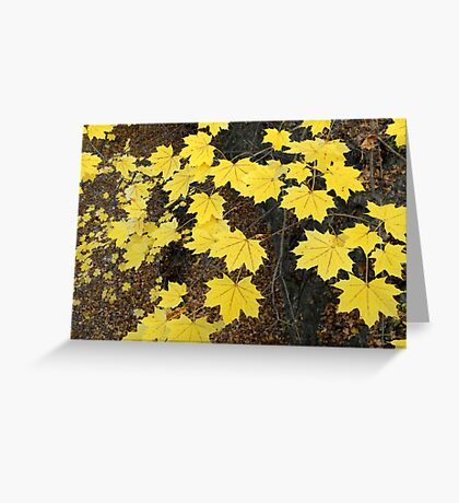 Golden Yellow Maple Leaves Greeting Card