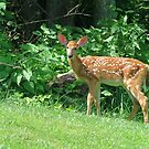 Fawn on the Lawn by Ron Russell